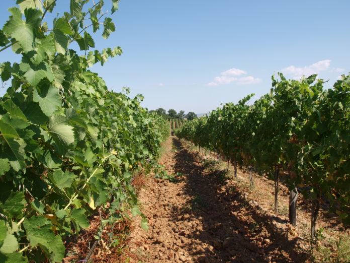 Депутатът Никола Динков пита земеделския министър за проблема с неизкупеното грозде. Министърът отговори, че проверките не са установили нерегламентиран внос от Румъния, Македония и Молдова