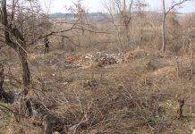 Двама свиленградчани задържани за незаконна сеч
