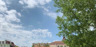 Абитуриенти засадиха бор в двора на училището си