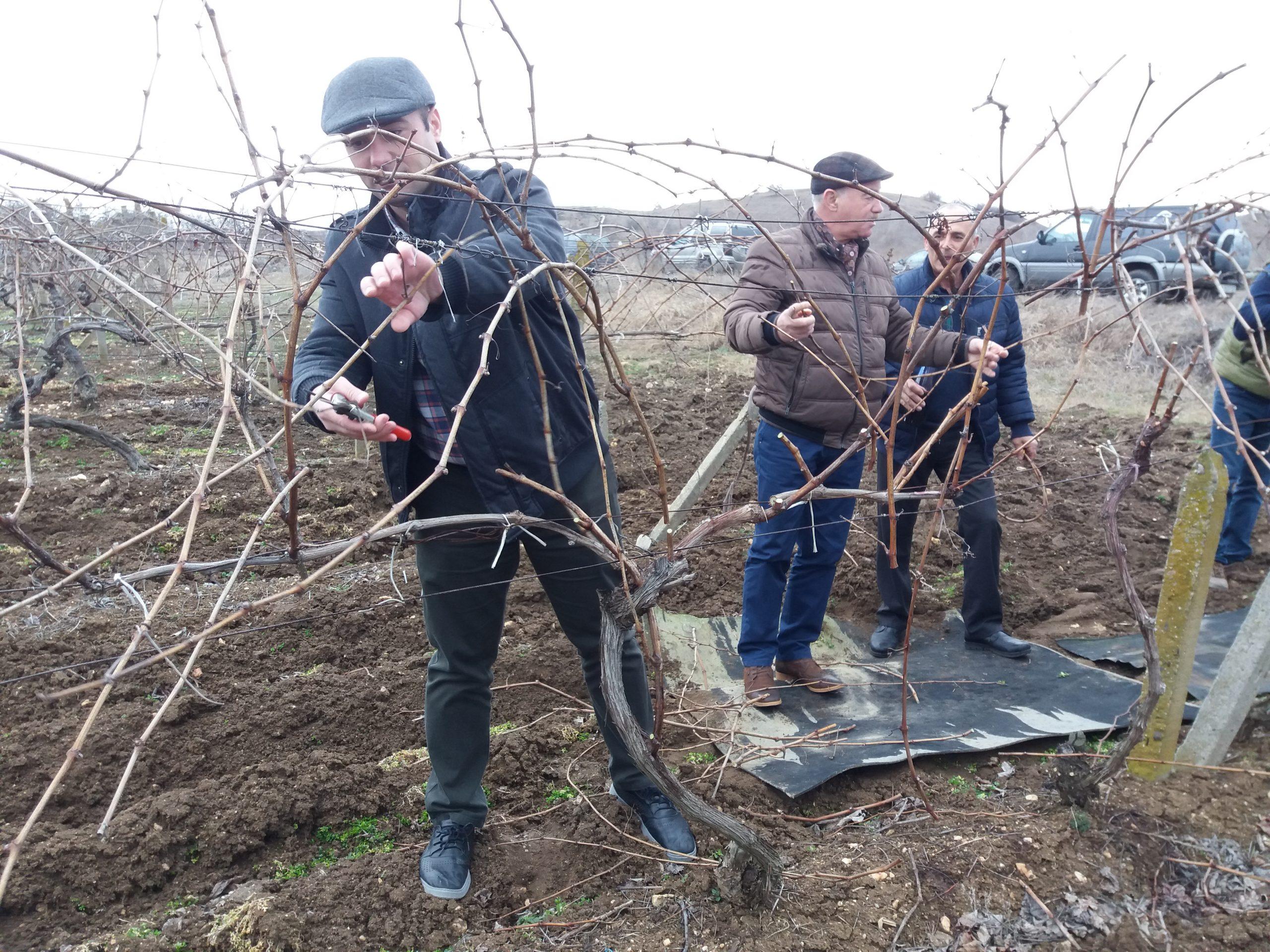 За Трифон Зарезан: В Димитровче зарязаха и избраха цар на лозята